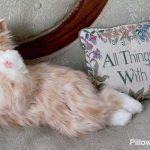 Companion Pet Cat